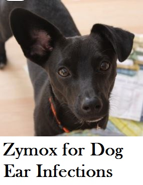Zymox can sooth ear infections in dogs without a prescription