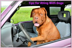 How to Keep Your Dog Safe, Healthy and Happy When RVing