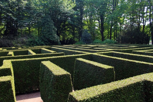 Somewhere in the Maze there Is a Reward  -  a Rat Is more Likely to Find It than Men