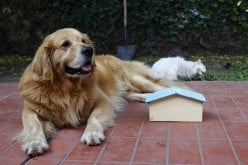 Dog House Do's and Don'ts for a Better Pet and Family Relationship