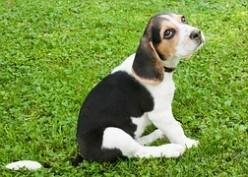 Meningitis: Dogs Can Contact A Neurological Condition