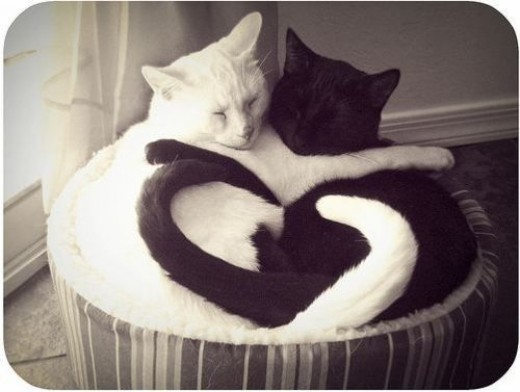 All cats are equally loving!