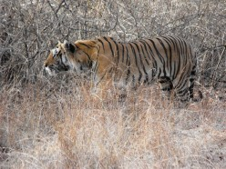 Discover Kanha National Park in India
