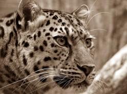 2016 Most Critically Endangered Species List