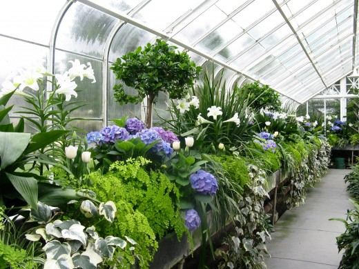Beautiful displays inside the conservatory include dozens of species of flowering plants.