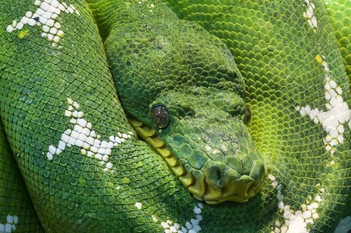 Worst Pet Reptiles for Beginners