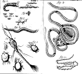 Illustrations from the English translation of Nicolas Andry's An Account of the Breeding of Worms in Human Bodies, London, 1701