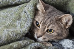 Twelve Warning Signs of Cat Cancer Every Owner Should Know