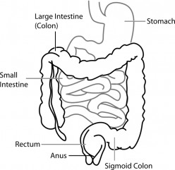 How to Improve Digestive System?
