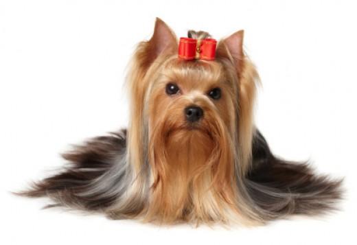 Groom your dog like you groom yourself