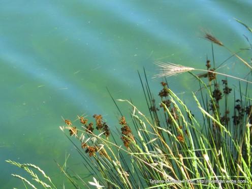 So clean azur river Karishnica