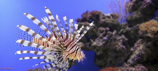 Saltwater Aquarium Pets