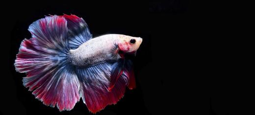 Freshwater Pets