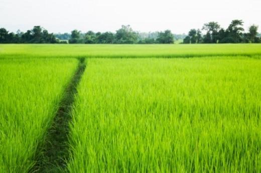 God's path is straightforward and simple.