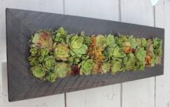 Vertical Succulent Frames