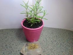 Sore Joint Rosemary Salve Recipe