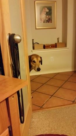 Caesar peeking around a corner