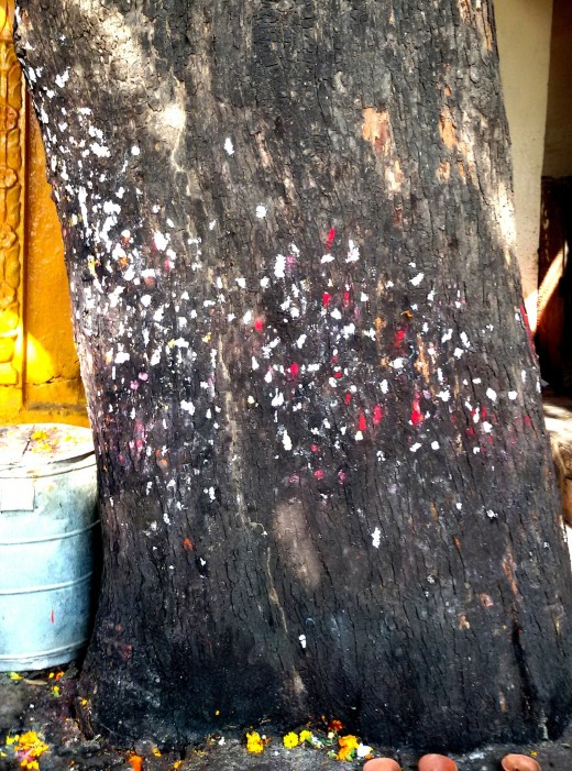 Sacred tree; Lalita Devi temple. Ladies attach vermilion and other dots (Bindiya) on the trunk of the tree