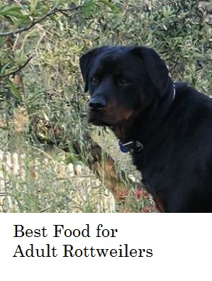Best Food For Dogs Prone To Diarrhea
