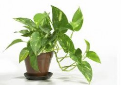 What's the longest time you've kept a houseplant?