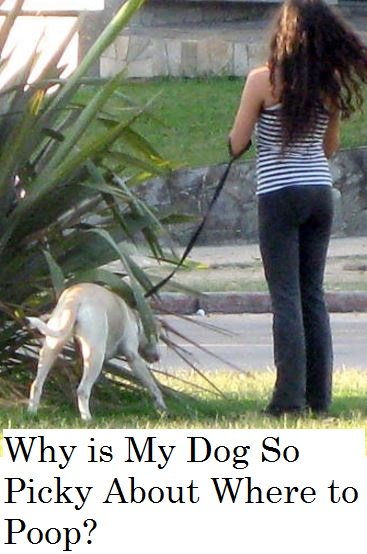 So Why Are Dogs So Picky About Where They Poop? Why Do They Have To Spend  So Much Time Contemplating A Good Spot And Then Go In Circles Sniffing  Before They ...