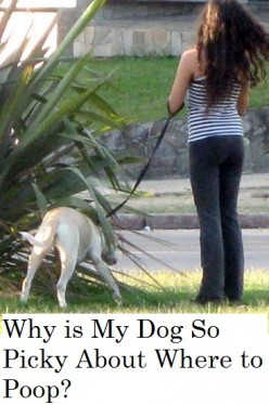 Why is My Dog so Picky About Where He Poops?