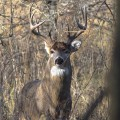 Is deer hunting worth it...if you don't get one?