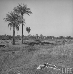 The Bengal Famine of 1943 and Aftermath