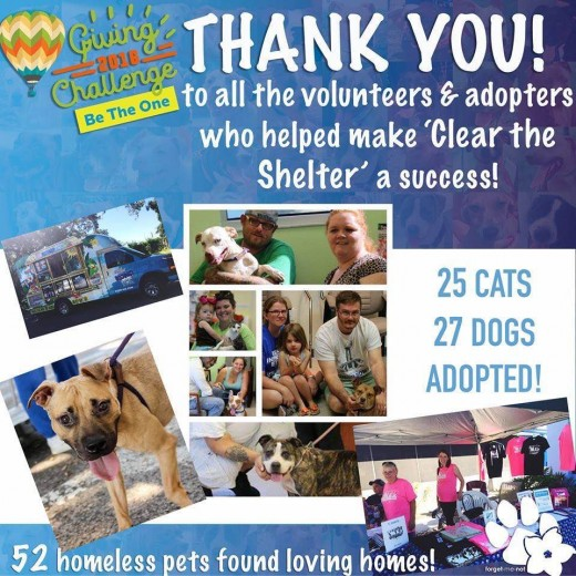 Example of successful partnerships between rescues and shelters