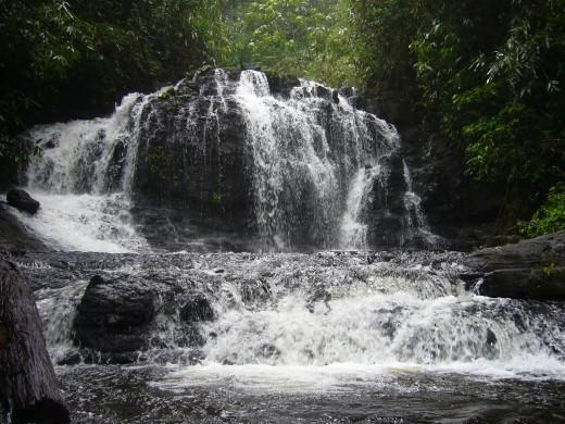 Gavi Forest waterfall
