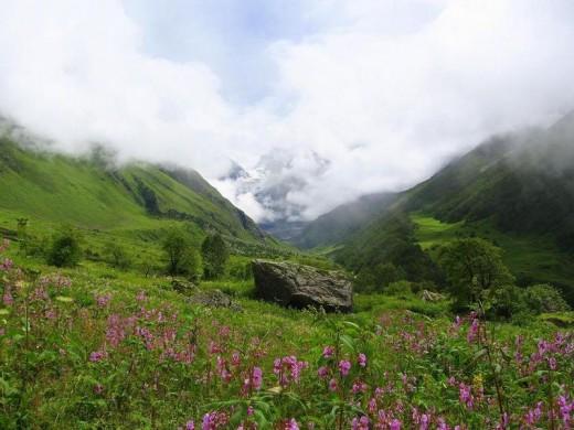 The Valley of Flowers, Nanda Devi Biosphere Reserve, Uttarakhand.