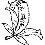 Jerlin Leeroy profile image