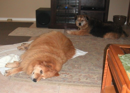 Cookie watched over her friend as she recuperated.