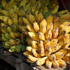 The Exotic of Banana