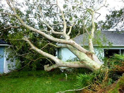 Tree lays across part of a home in Melbourne, Florida