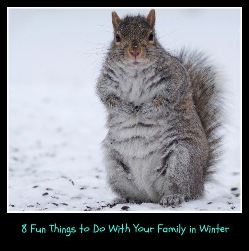 8 Fun Things to Do With Your Family in Winter