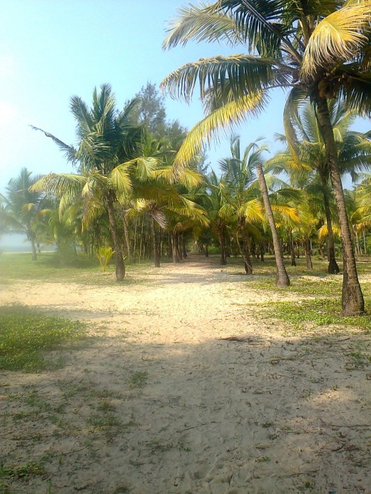 One of the stunning empty beaches of Alleppey.
