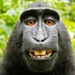Monkeys Using Cash to Buy Bananas