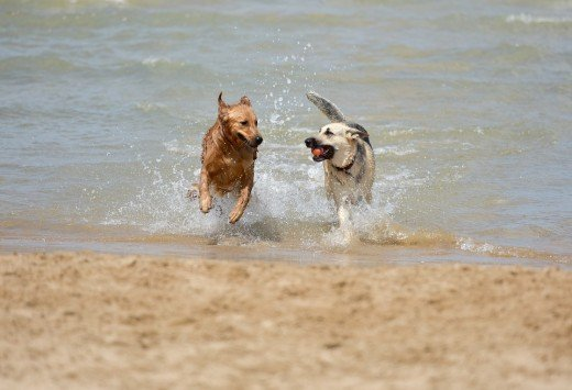 Socialization helps dogs play and bond.