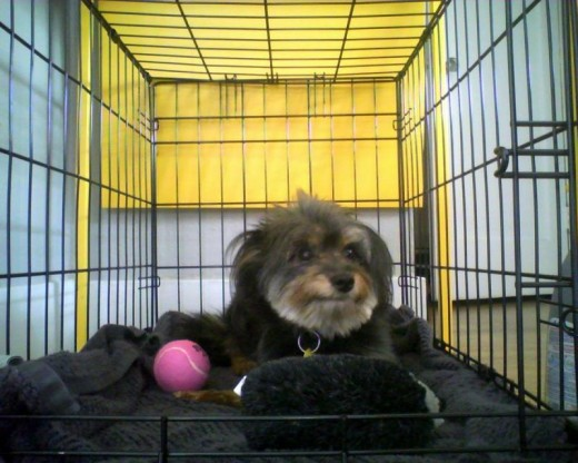 Dog Crates for puppies