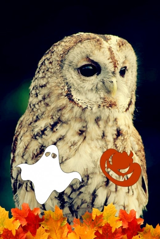 The owl is steeped in tradition and superstition and is a familiar icon at Halloween