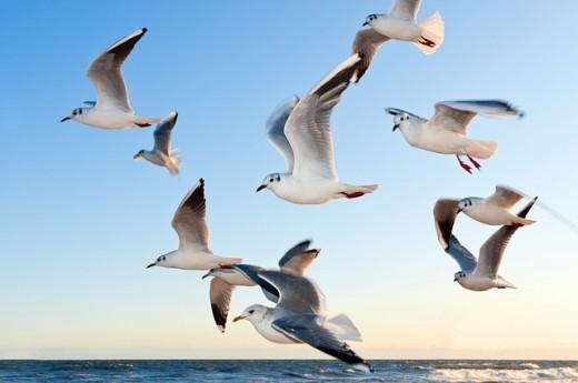Birds Migraing How do Birds Navigate - Magazine cover