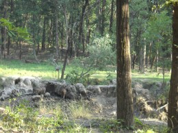 natural Salt Licks at Kanha