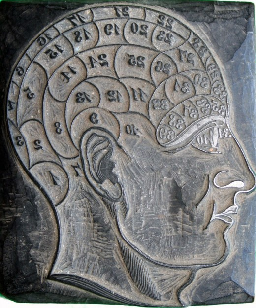 A phrenology head used by George Burgess (1829-1905) in his profession