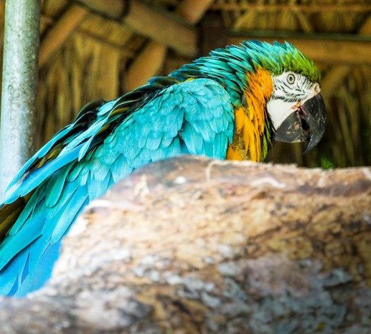 Macaws come in blue - I never knew that!