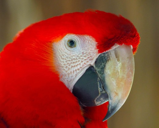 If you look closely, you can see my reflection in the macaws eye!