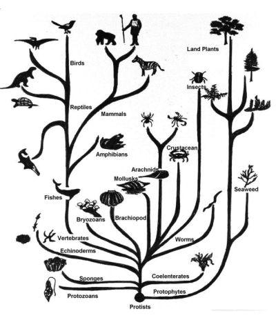 Simple Tree of Life