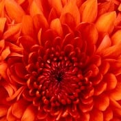 Ayesha72 profile image