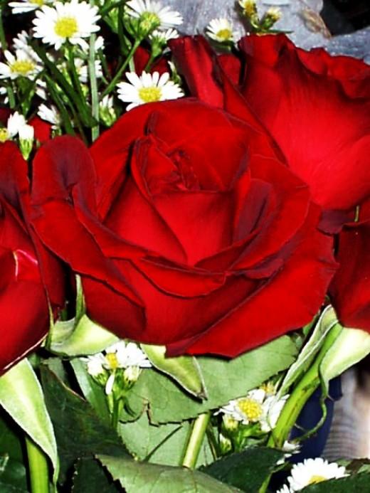a precious rose of life...