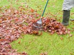 Why Raking Leaves is a Good Exercise for Perfectionists
